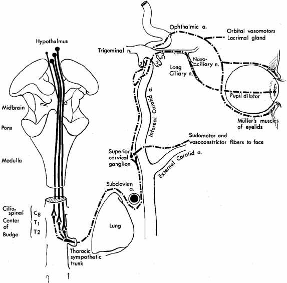 Oculocardiac+Reflex+Pa...