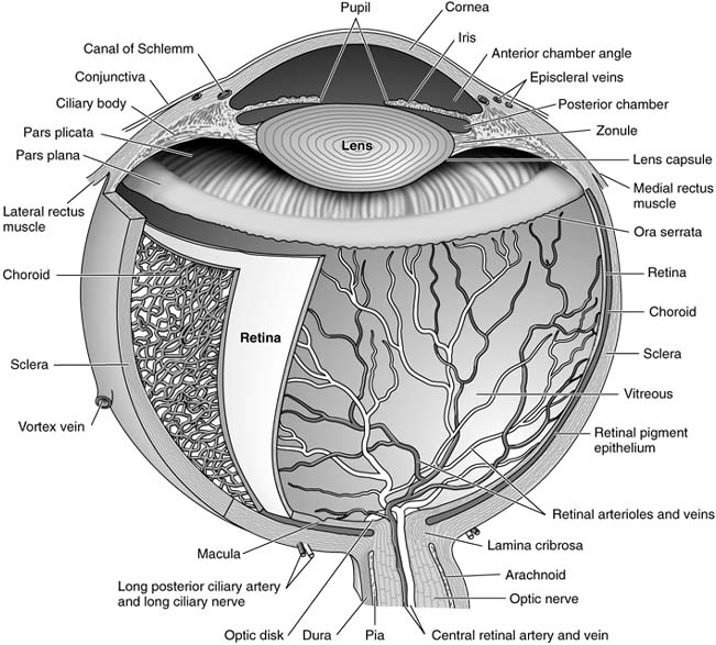 AccessLange: General Ophthalmology ; Chapter 1: Anatomy & Embryology ...